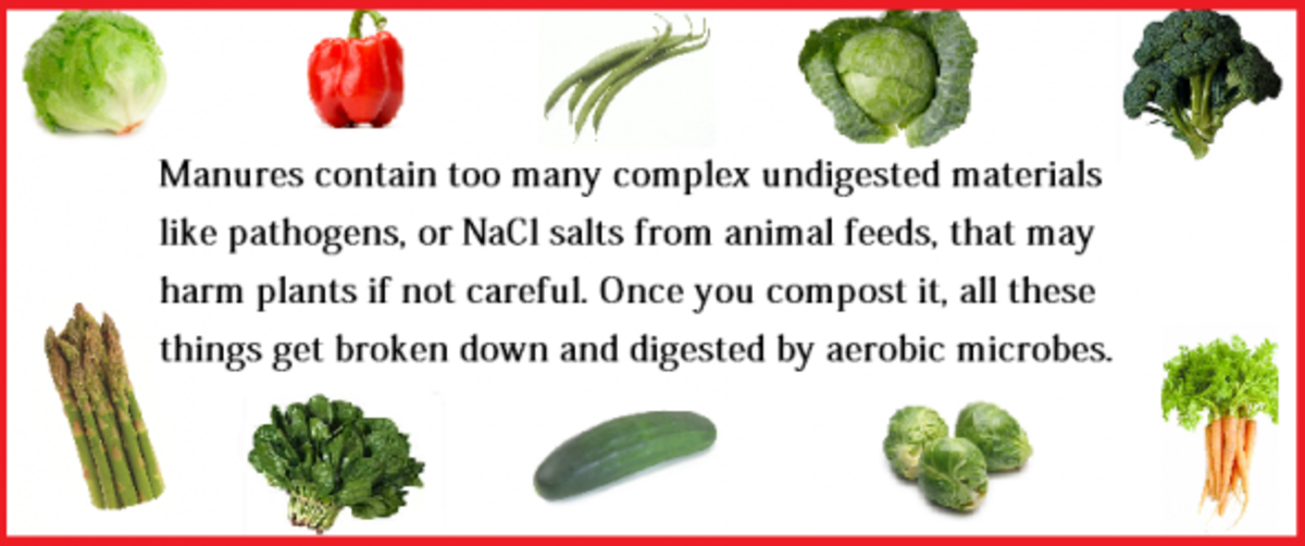 best-manures-for-your-veggie-garden