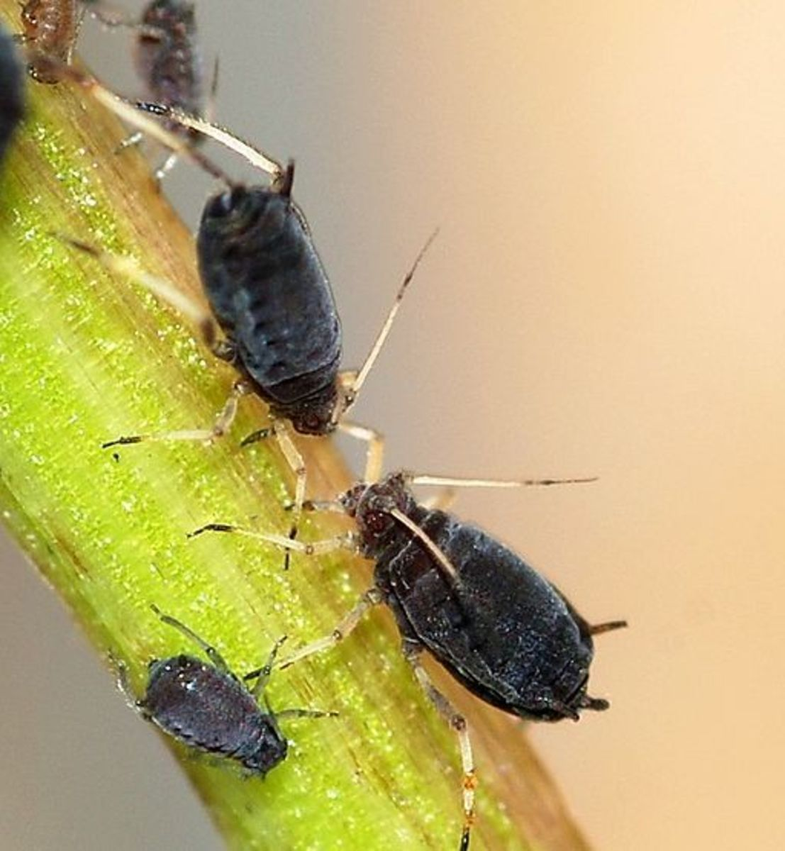 garden-insect-control