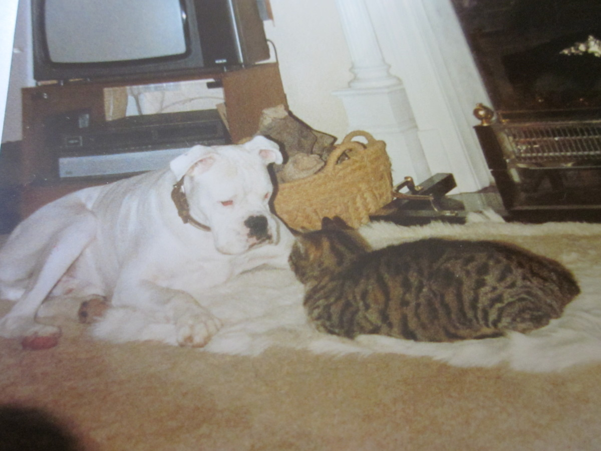 Bugsy, not deaf, not blind, friend, playmate, guardian.