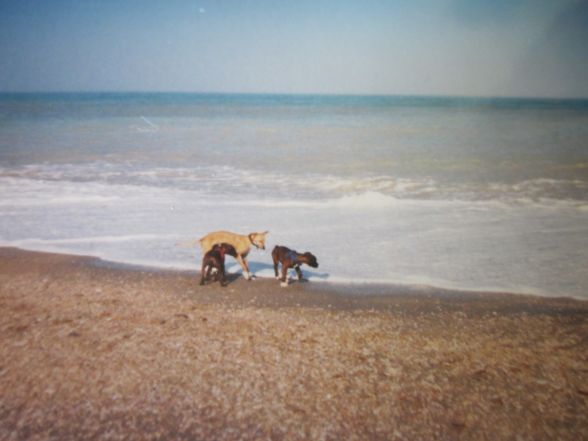 """At the beach with """"mummy"""" Rio, and Arnie"""