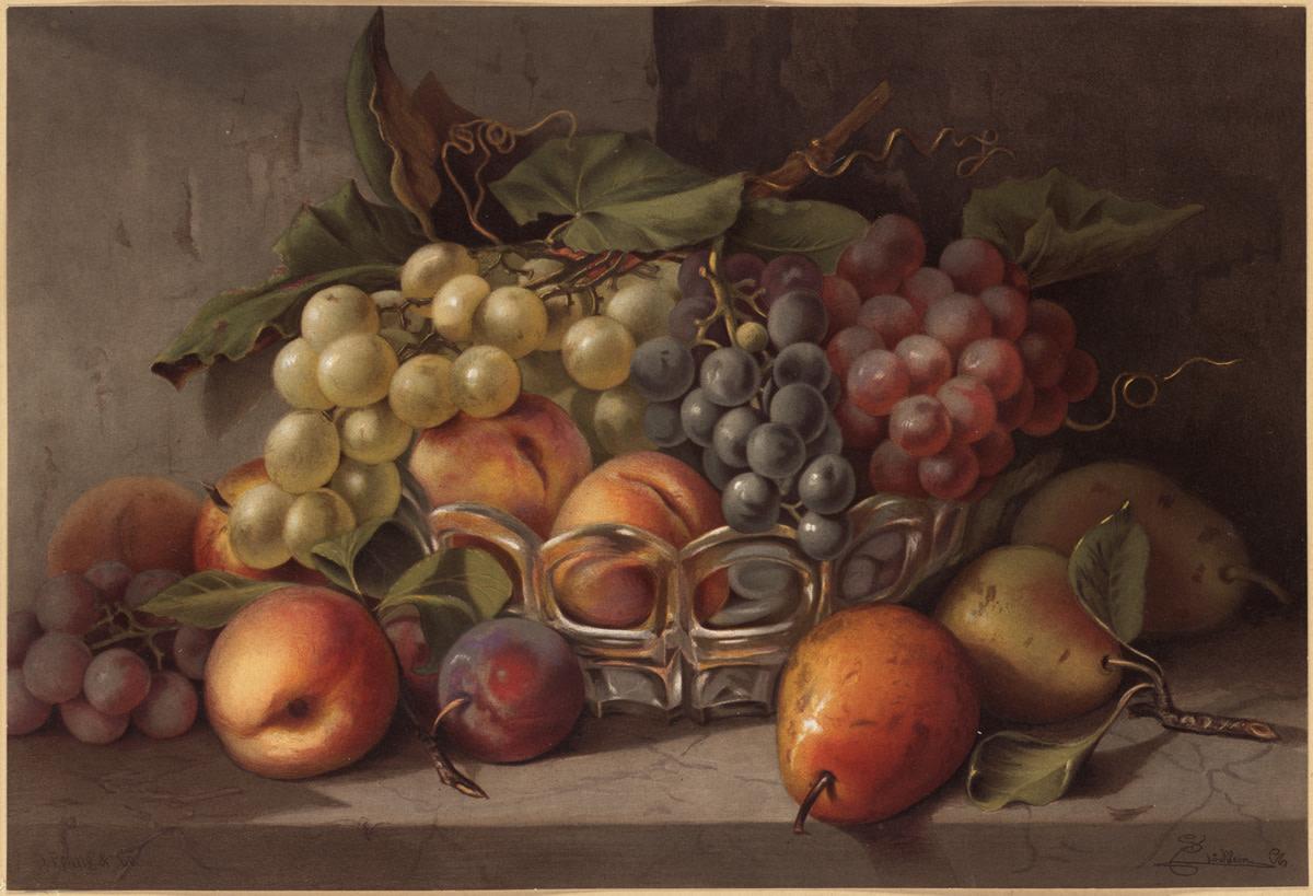 Grapes ('Autumn Fruit', Boston Public Library)
