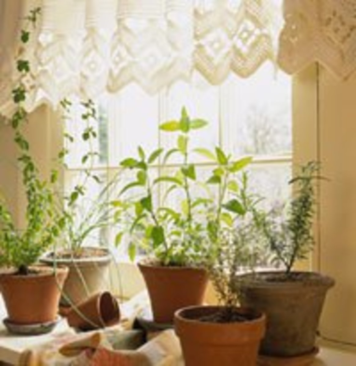 You can easily grow a great indoor herb garden in front of a south facing window.