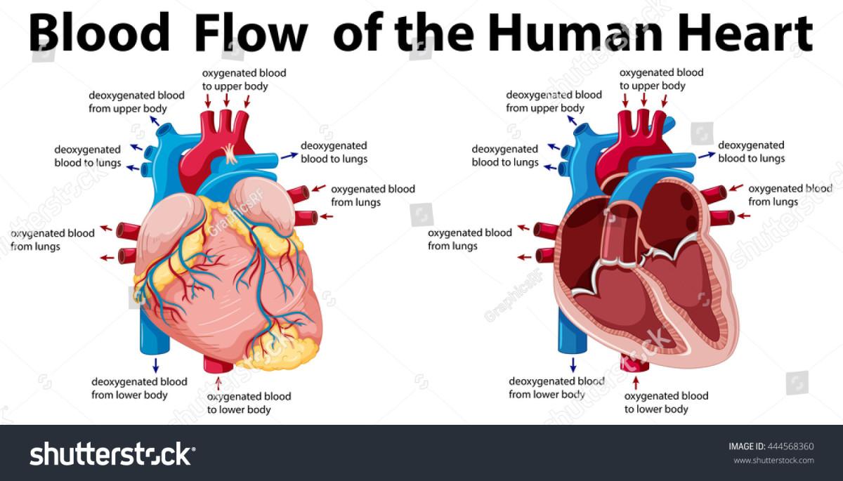 heart-arrythmia-and-cardiac-ablation-symptoms-treatment-and-causes