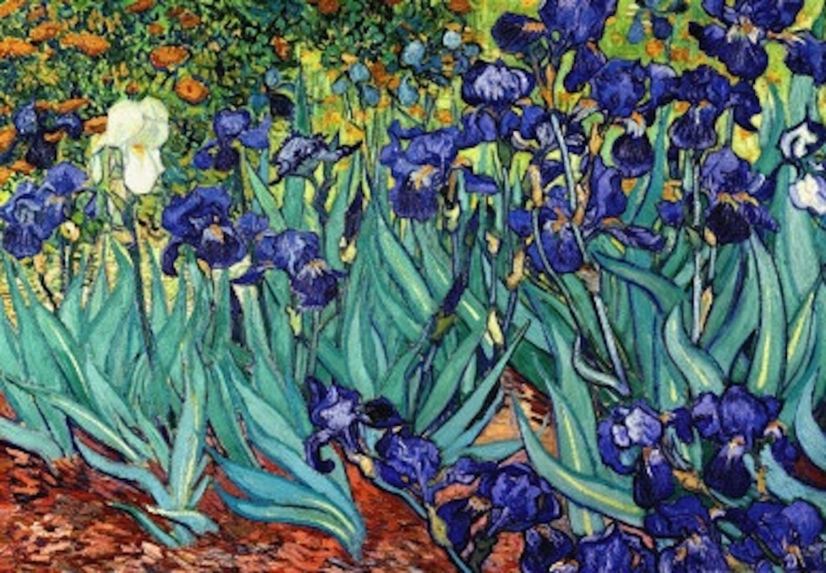 Irises, Saint Remy, 1889  by Vincent Van Gogh