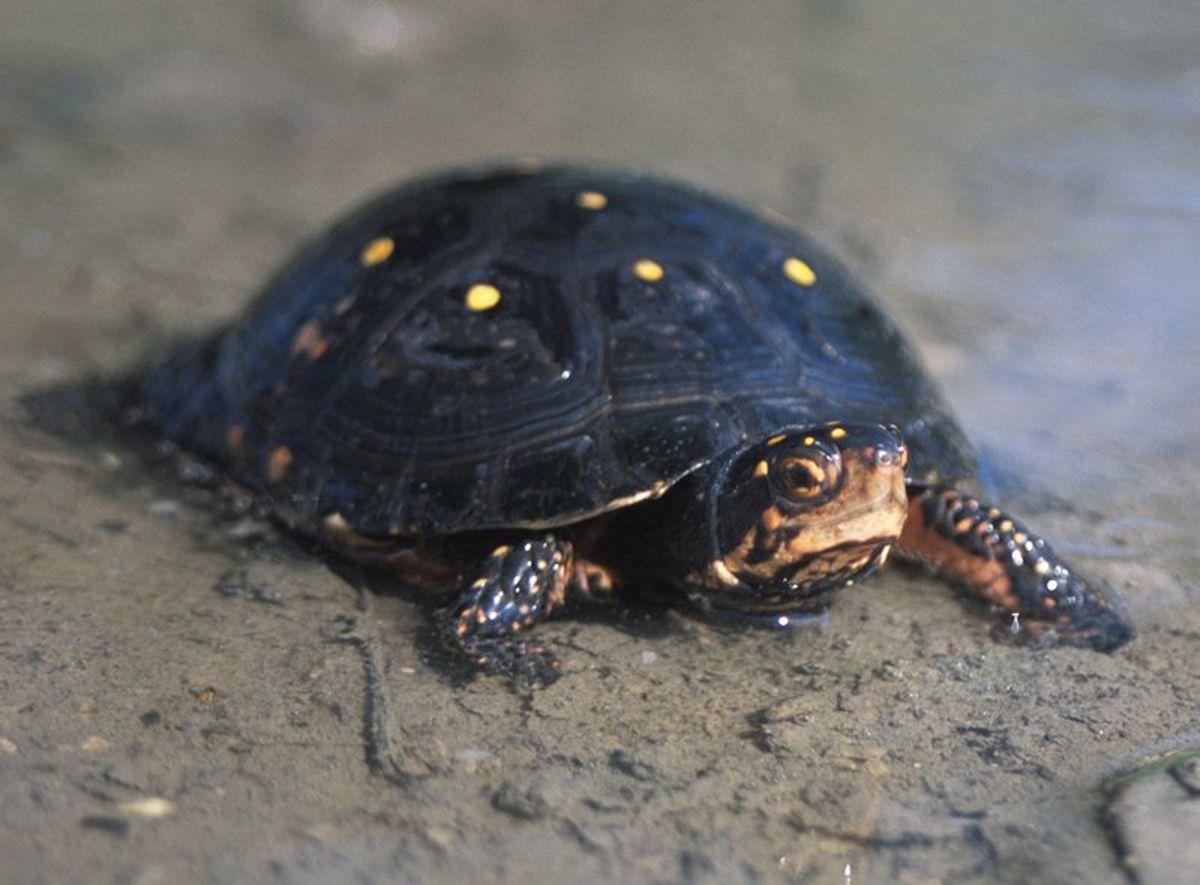 floridas-wildlife-reptiles