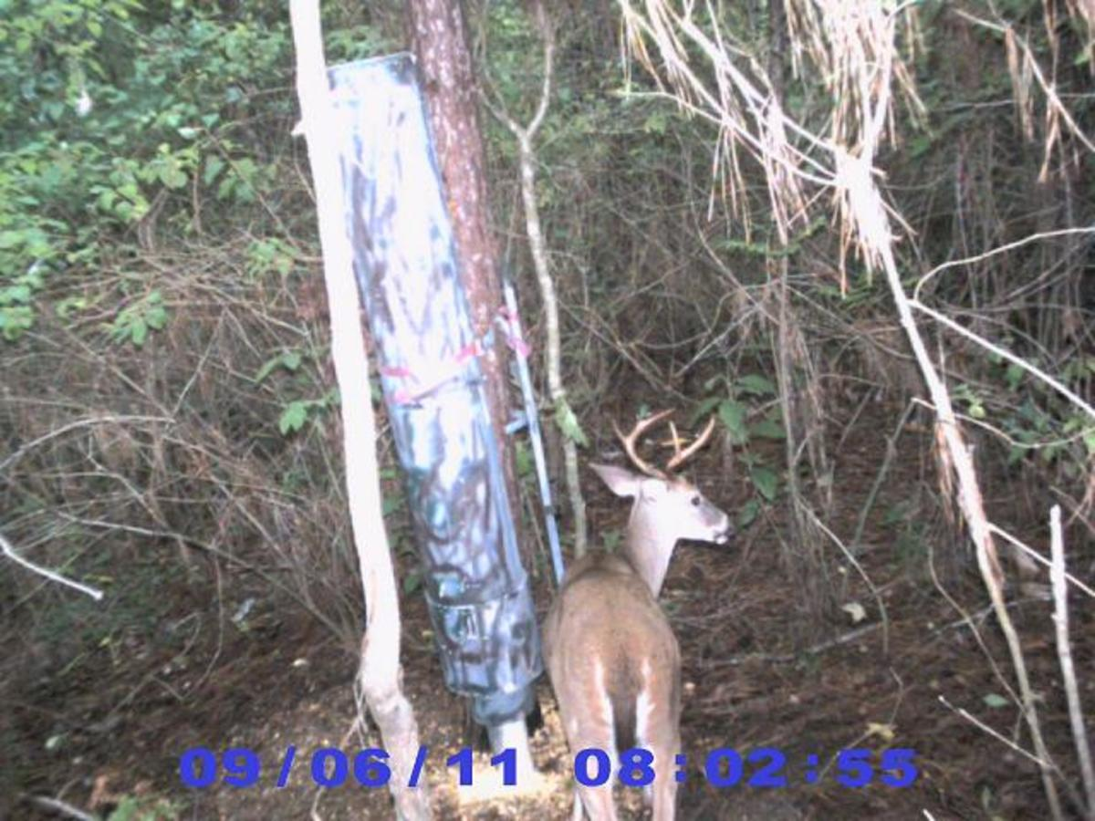 how-to-make-a-deer-feeder
