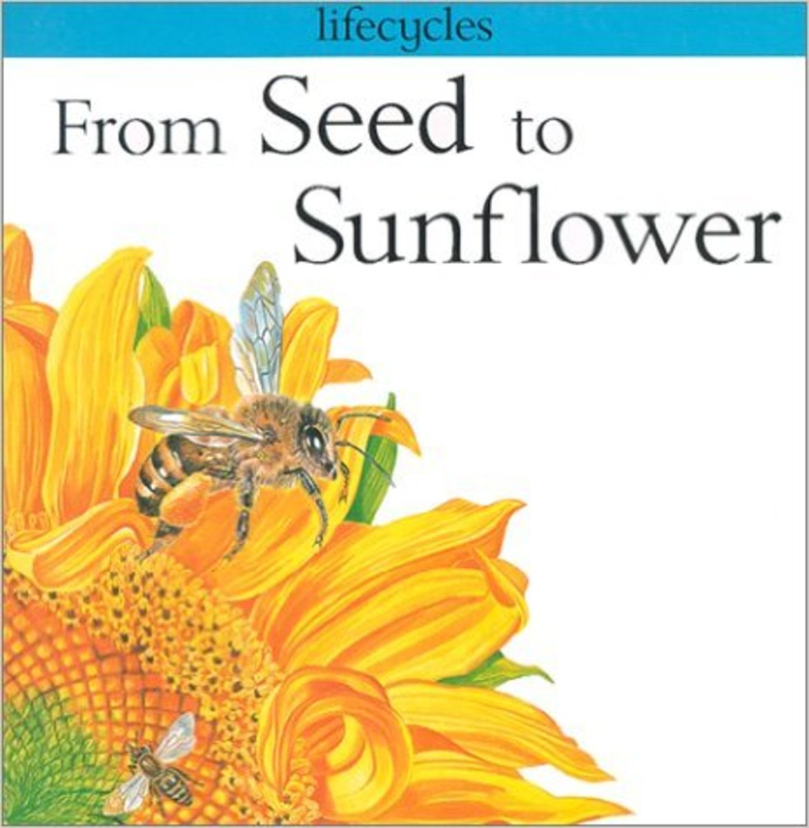 From Seed To Sunflower (Lifecycles) by Gerald Legg