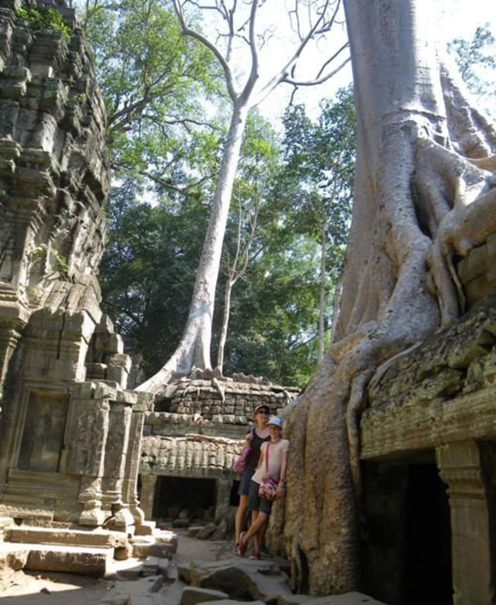 Spung Tree in Angkor