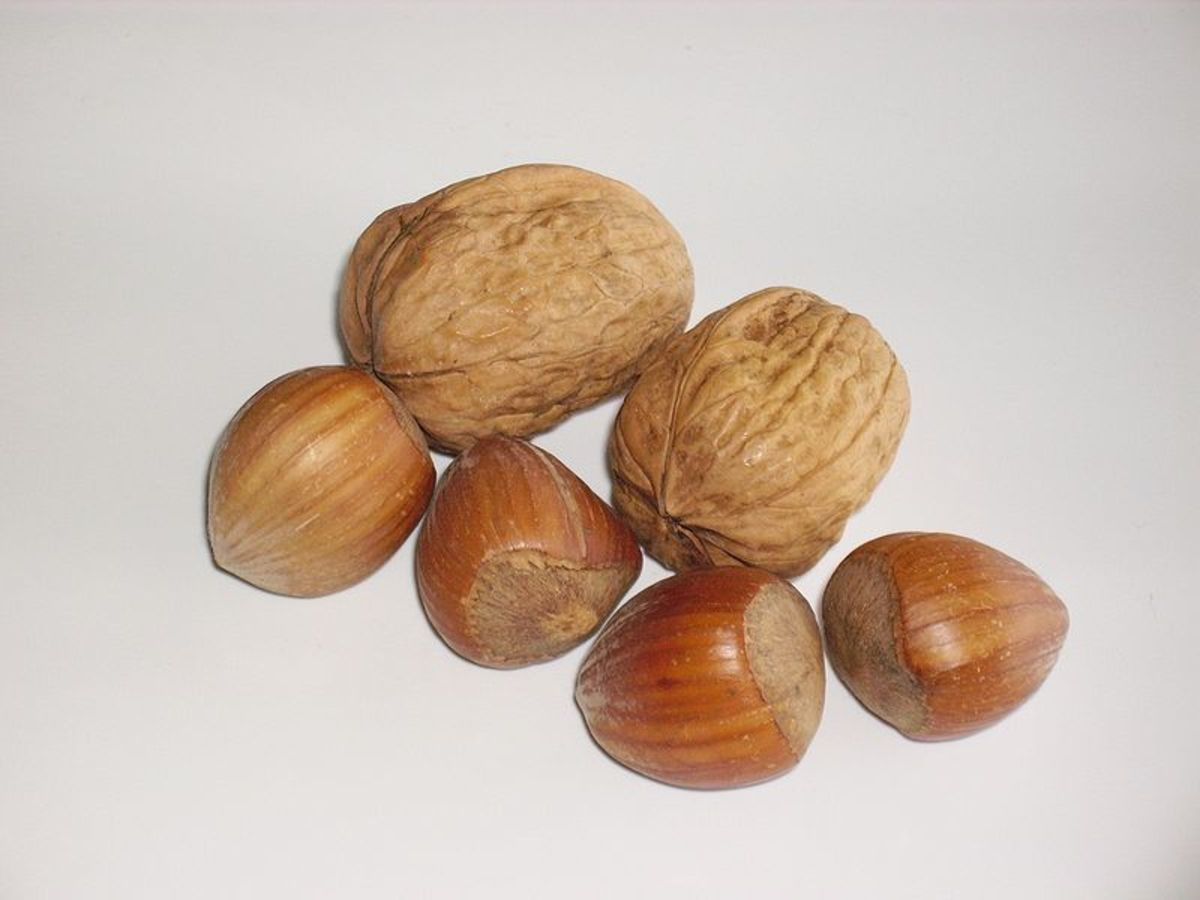 Two Walnuts and four hazelnuts  by Garitzko