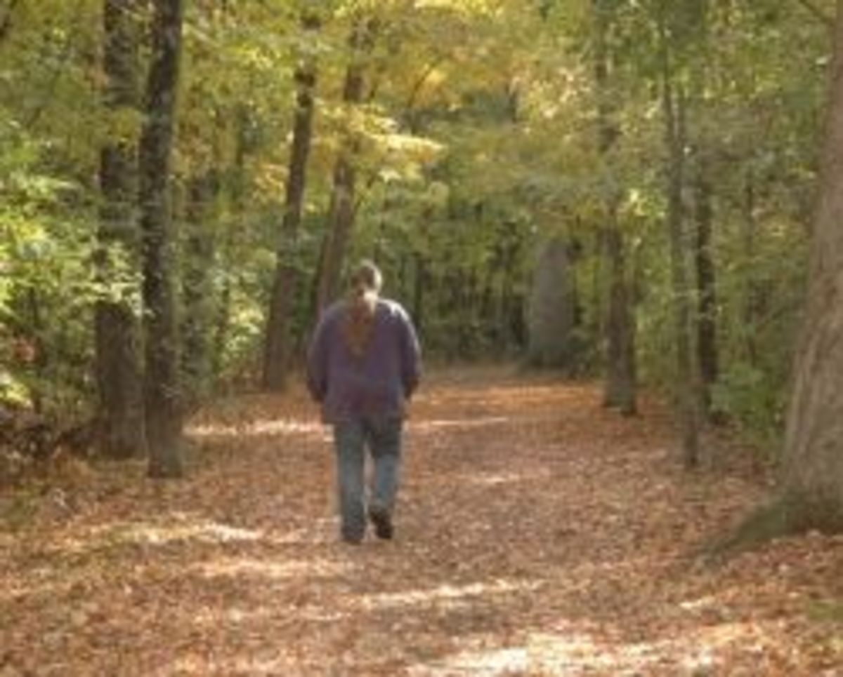 It's beautiful hiking through the woods on a nice autumn day.