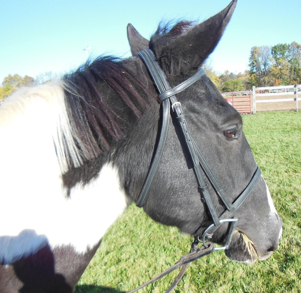 I love horseback riding!!