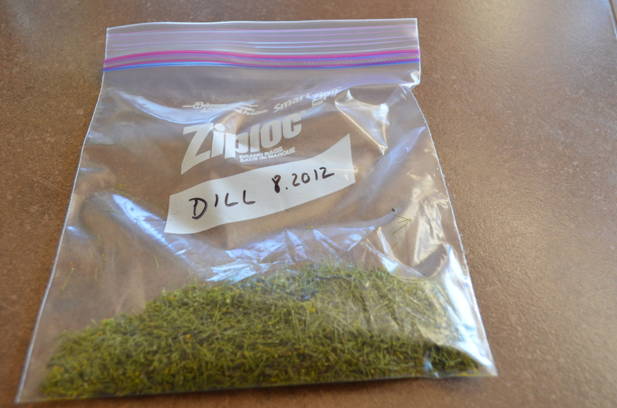 Dill has a very unique smell but sometimes it helps to label other herbs.  Dating them is also a great help so you'll know how much you used or how long an herb lasts.