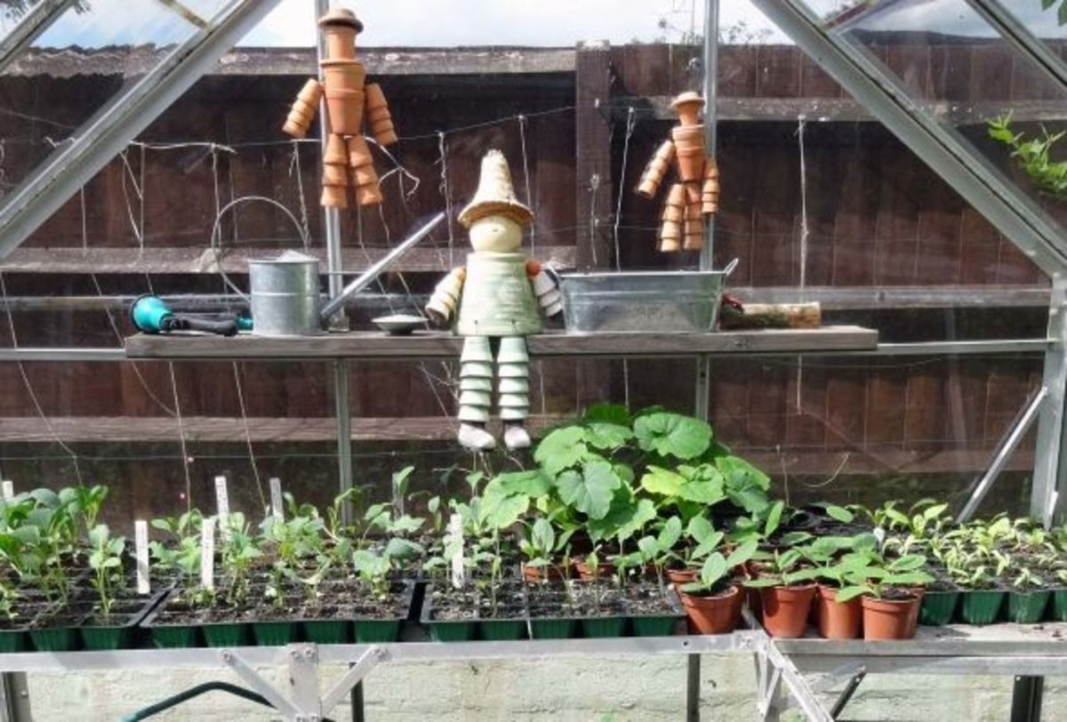 Shelving for greenhouse made from decking