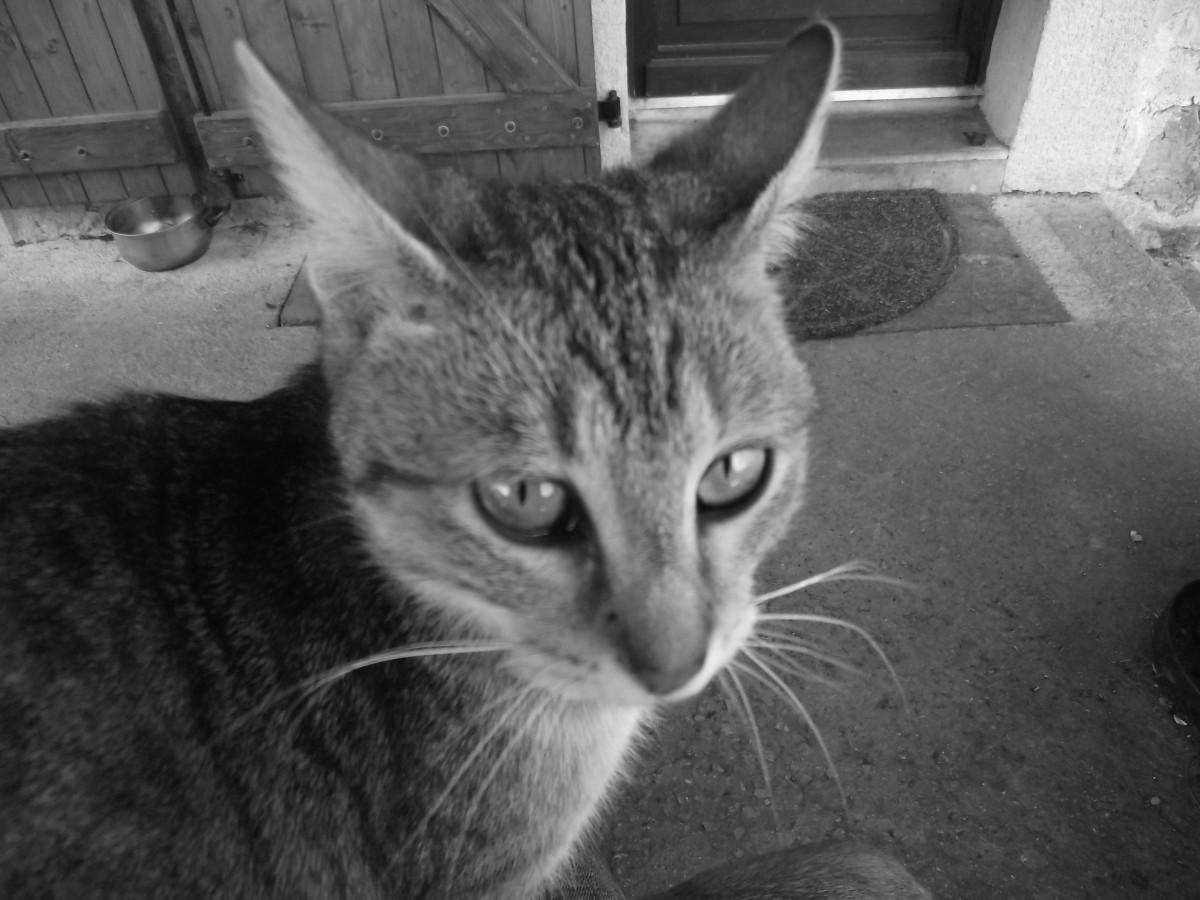 The enigmatic cat.