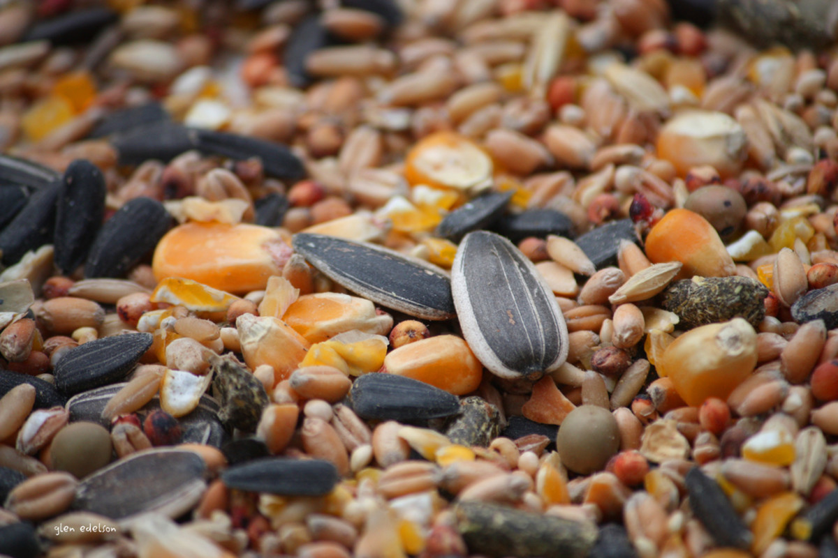 Adding supplements to plain bird seed diets can enhance your bird's health.