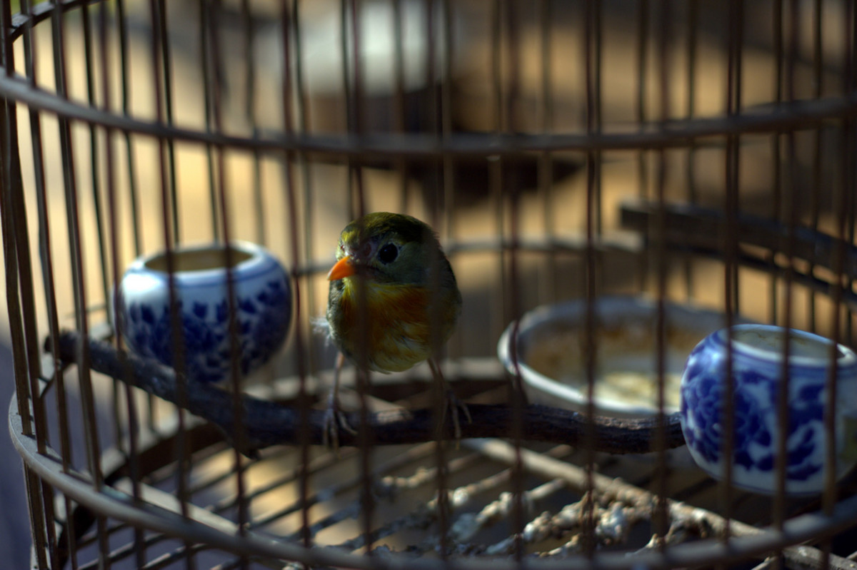 How to Purchase Bird Supplies for Your Pet Bird