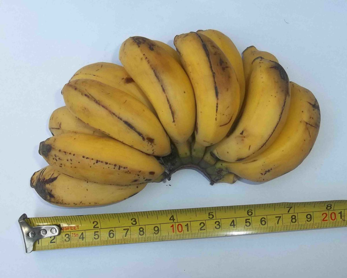 Gacukari - one of the sweetest bananas, it is never cooked but prized as ripe fruit