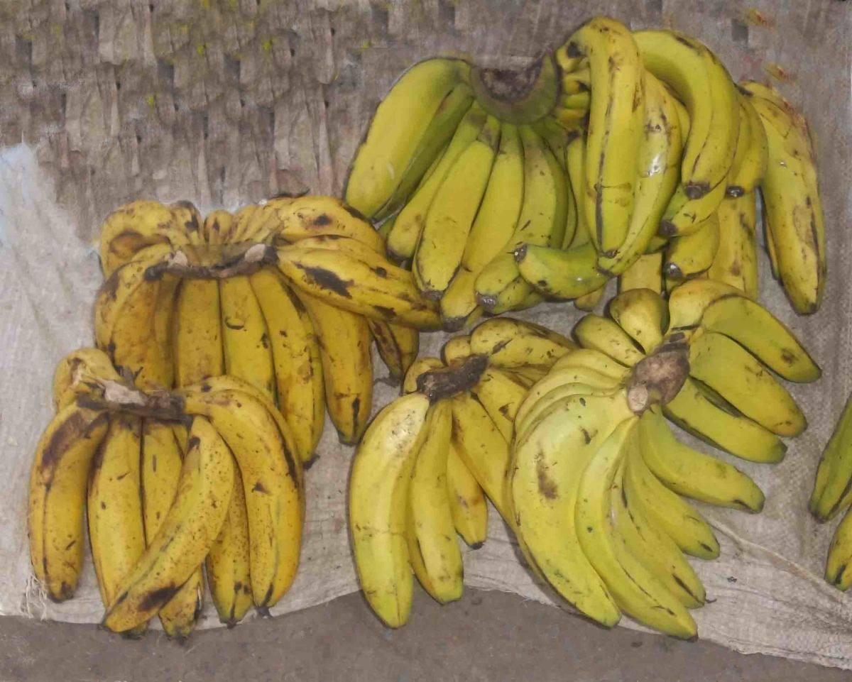 Bananas are richer in nutrients than apples
