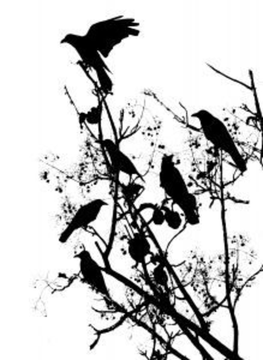 A Crow Funeral