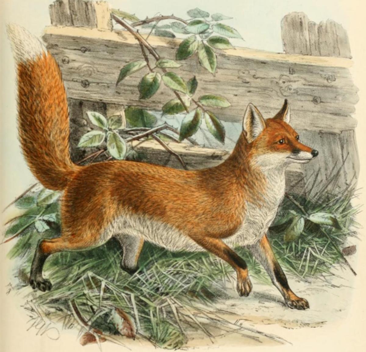 Mivart, St. George Jackson, 1827-1900 public domain