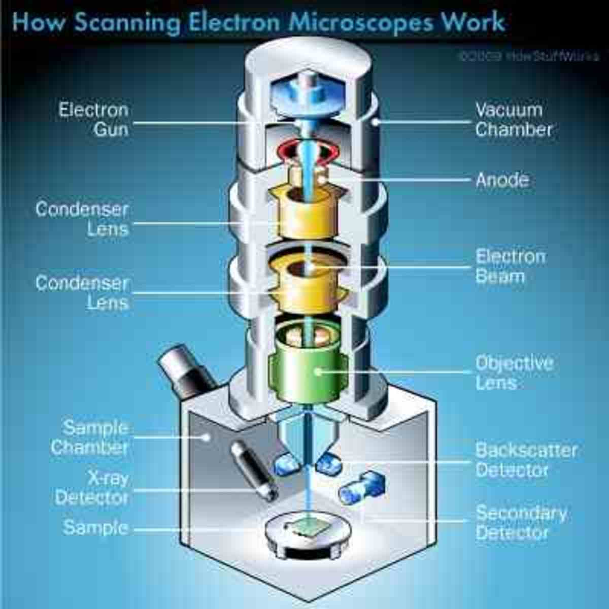microscopes-a-fascinating-look-at-the-micro-world