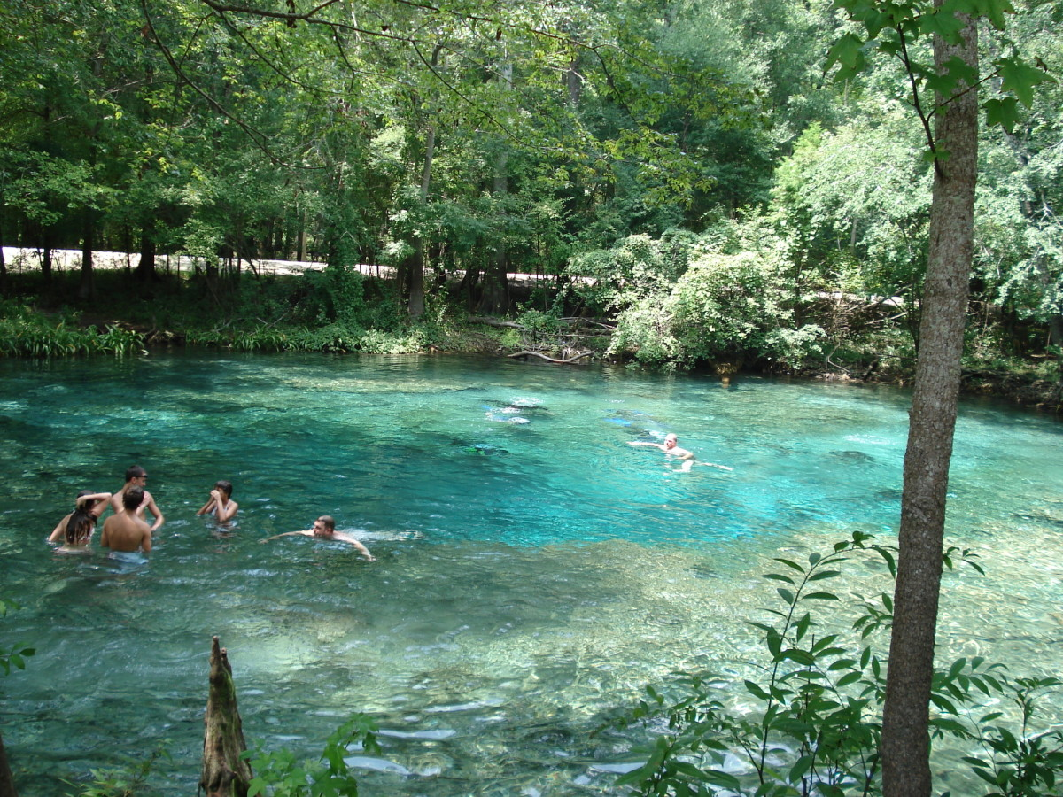 Ginnie Springs is an icy cold, swimmable spring in Florida.