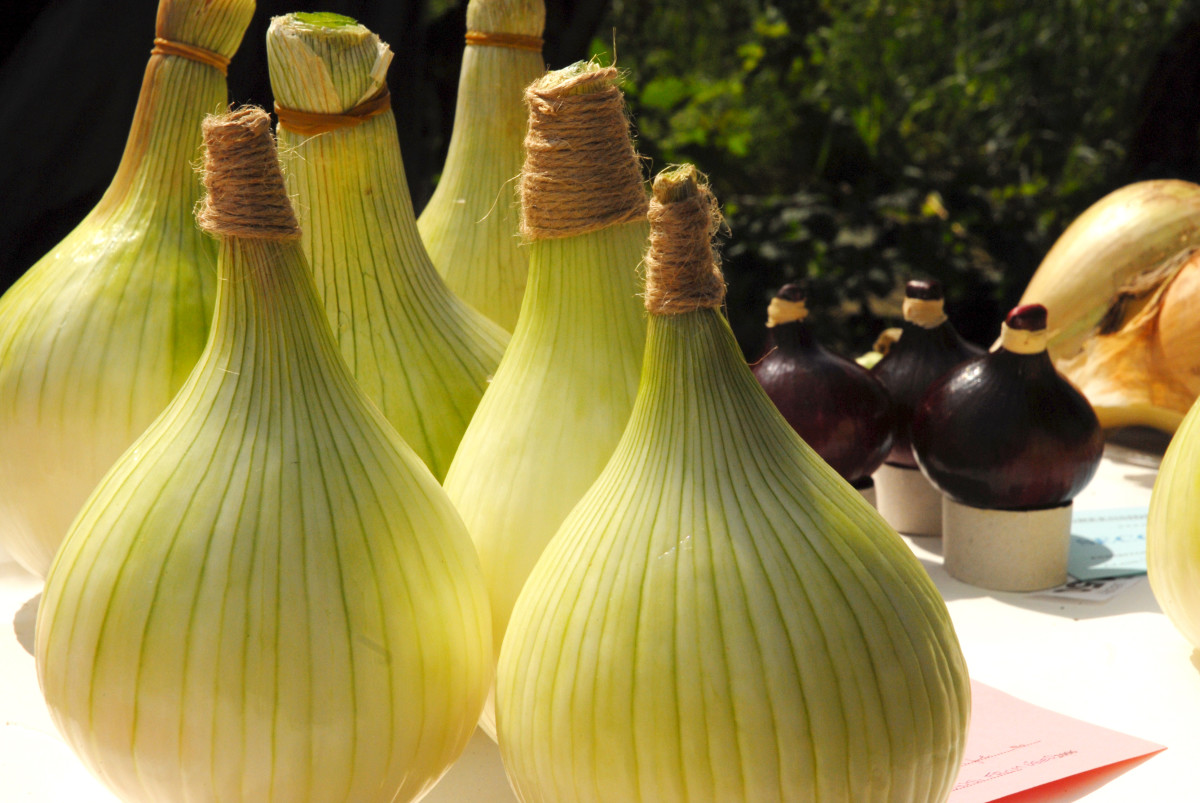 The wonderful thing about onions, are onions are wonderful things....