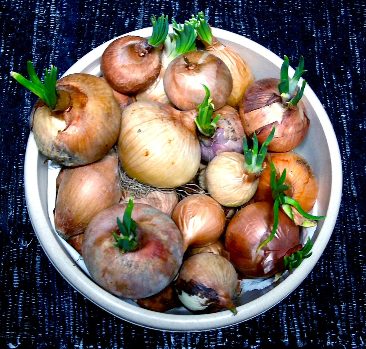 Onions - straight from the garden into the juicer to make a healing onion juice