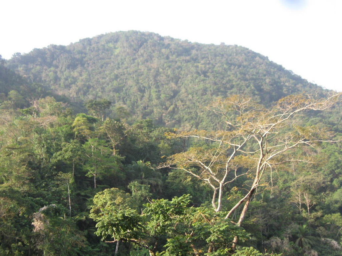 Lebialem Highlands, cross-river gorilla habitat