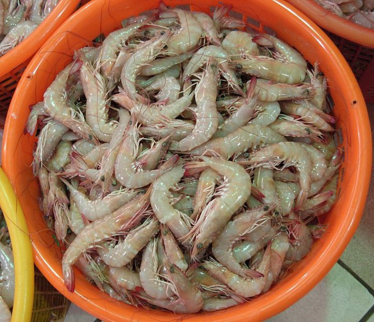 Chemmeen (Prawns), Kerala earns high revenue through its export