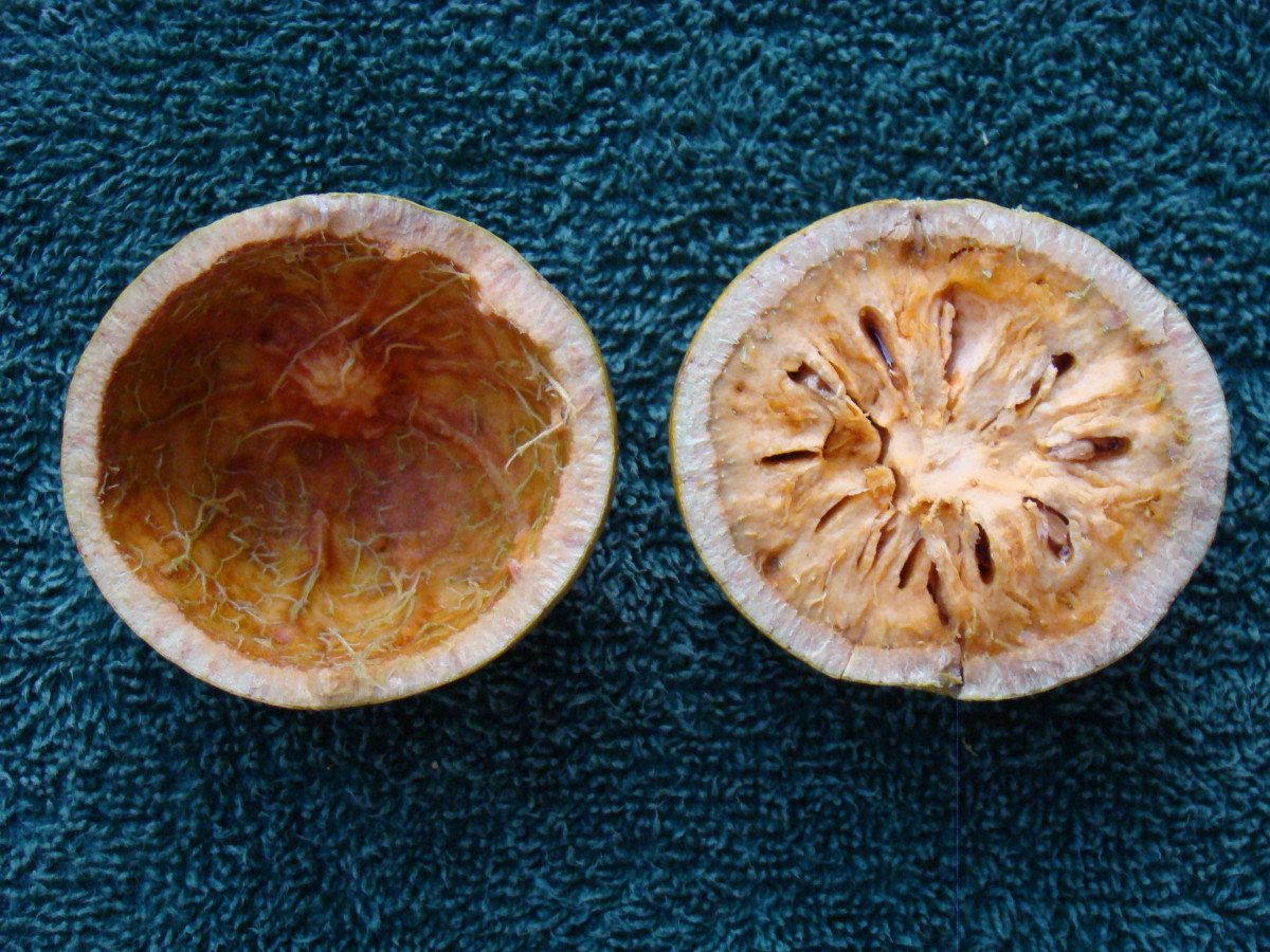 Bael fruit cut into two and flesh of one scooped out.