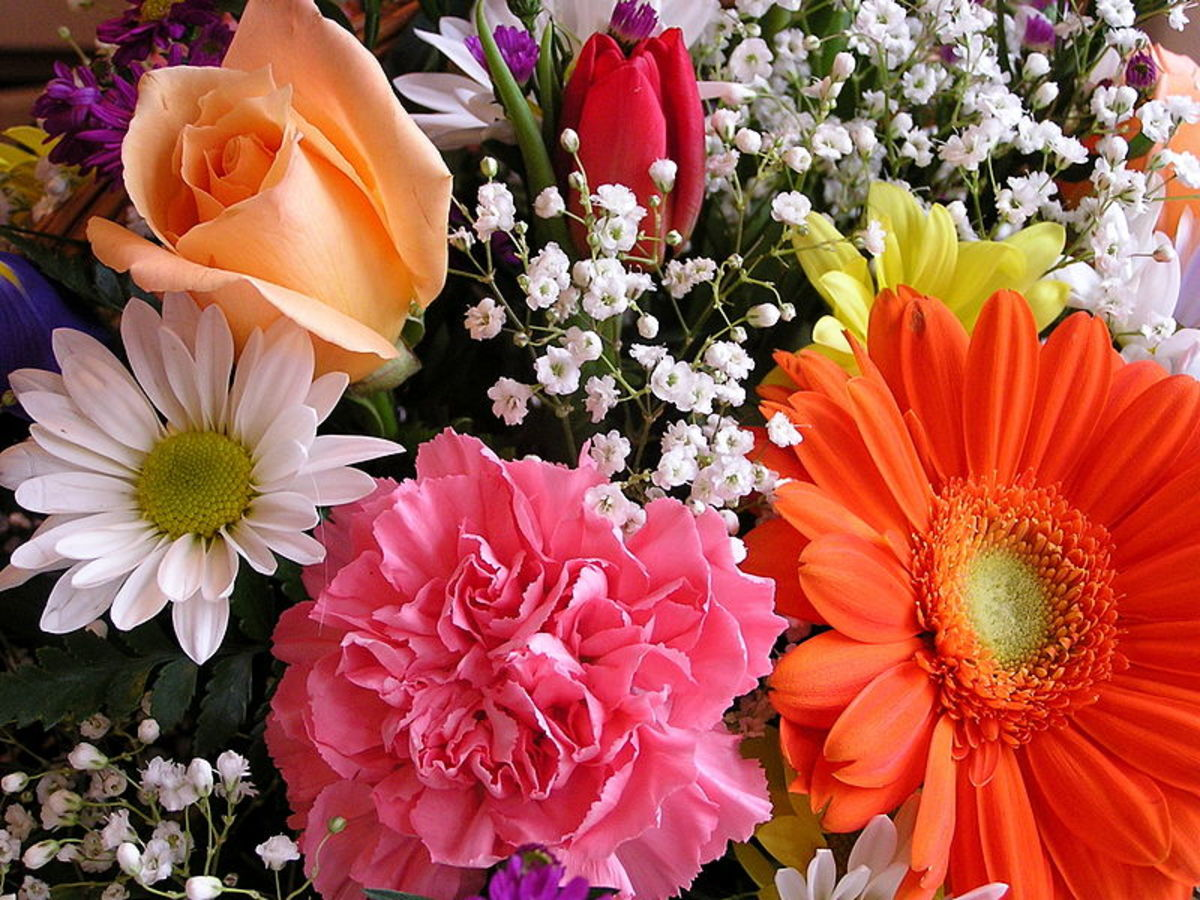 Abundance and perfection give Western bouquets their lush, healthy beauty.