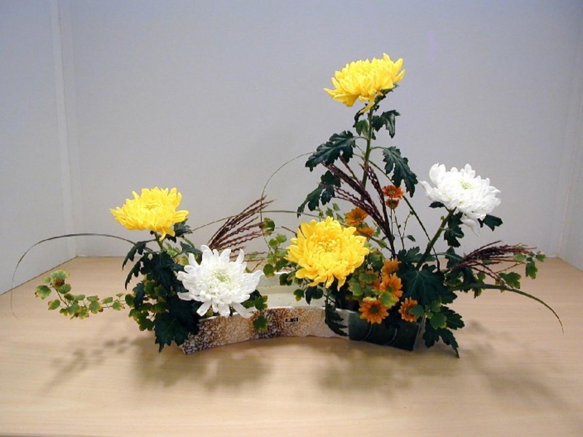 Mums are often used in ikebana arrangements.