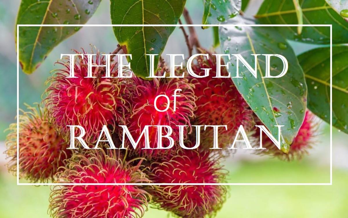 The Legend of Rambutan (Nephelium Lappaceum)
