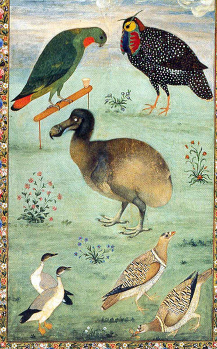 Dodo among Indian birds, by Ustad Mansur, 1625