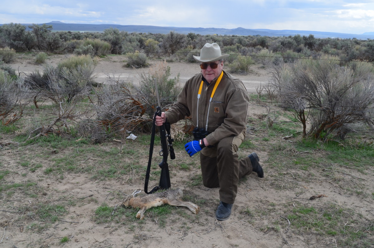 The stainless Ruger M77/22M in .22 WRM serves well in the sagebrush and edge of the alfalfa pivots.