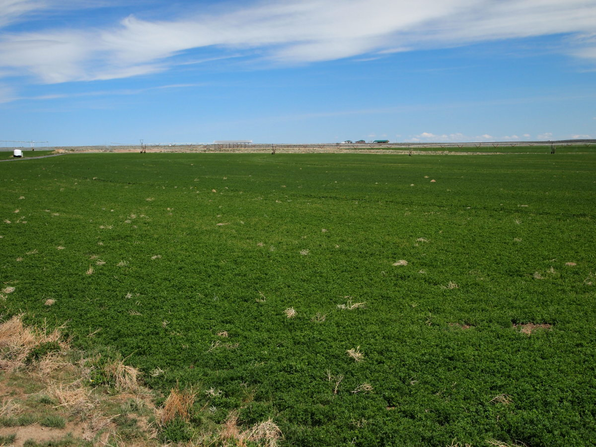 Acres of alfalfa, with the awareness that there's a home and irrigation equipment in the distance, so we MUST know with certainty what will stop that bullet.