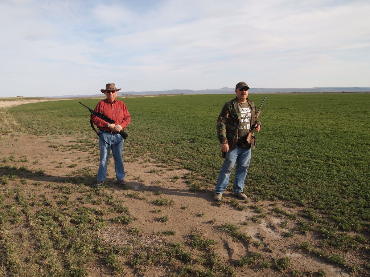 Tom and Mike scan the alfalfa fields for sage rats.
