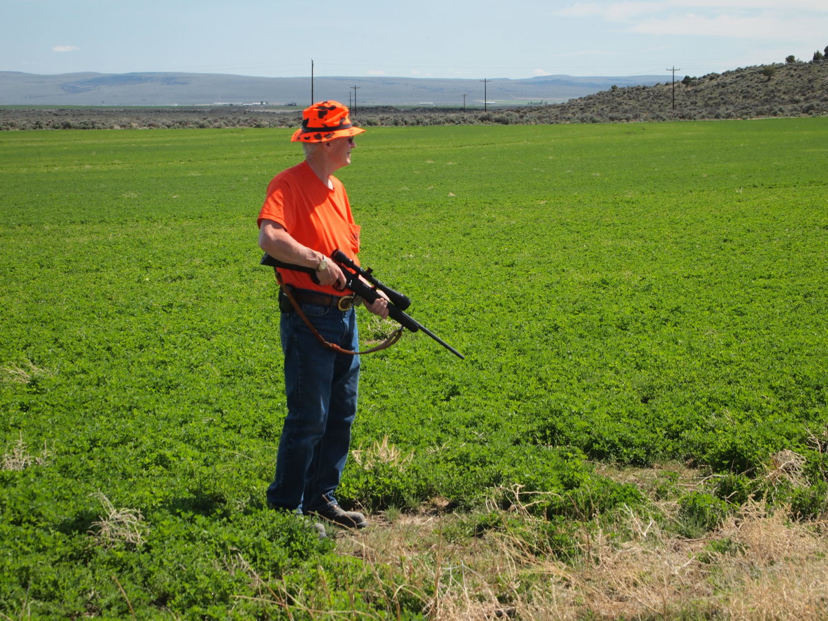 Dan holds his .17 HMR and surveys the alfalfa for ground squirrels.