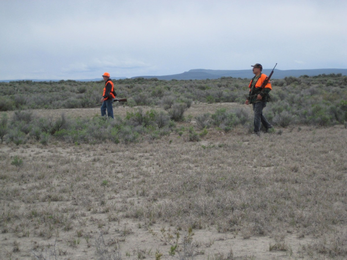 Walking through the sagebrush, carrying shotguns, flushing jackrabbits.