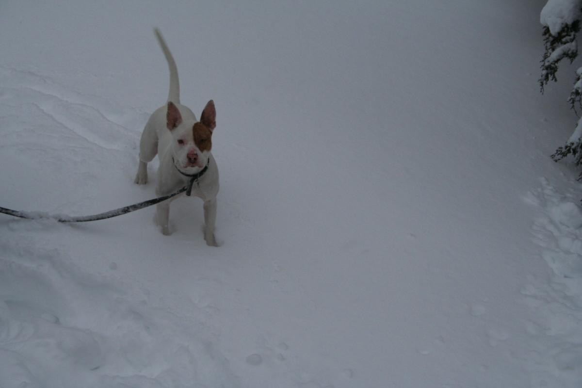 Proper Dog Management Tips for Pet Owners