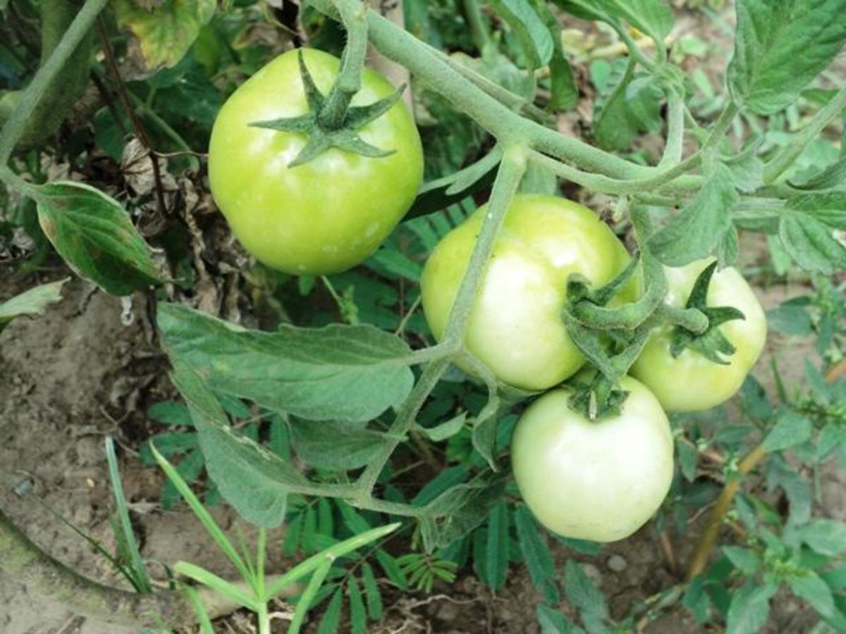 nuvali-greens-an-patches-organic-demo-farm