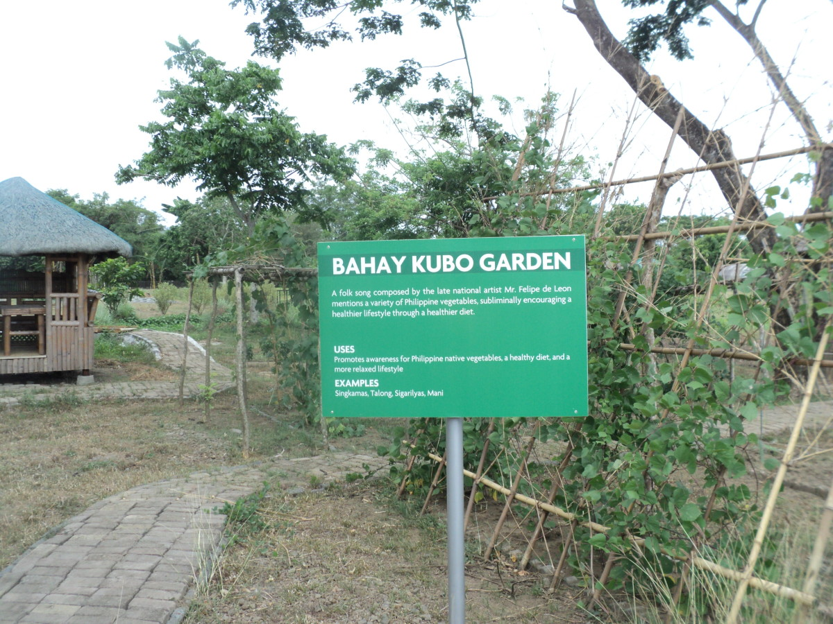 Nuvali Greens and Patches, Organic Demo Farm in Sta. Rosa Laguna Philippines