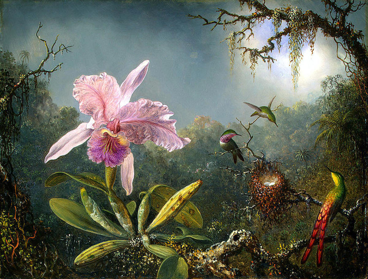 Orchid et Colibris (Orchid and Hummingbirds)