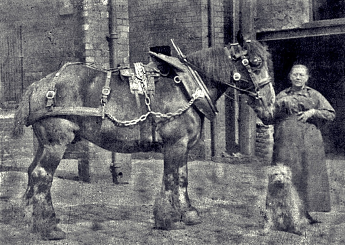 Horse-drawn carts were the only mode of transport in grandad's childhood. This picture shows one of the Hunslet Shire horses who used to pull an early mode of public transport, the local bus.
