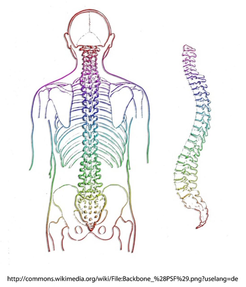 Can You Dislocate a Rib? : Treatment for rib dislocation