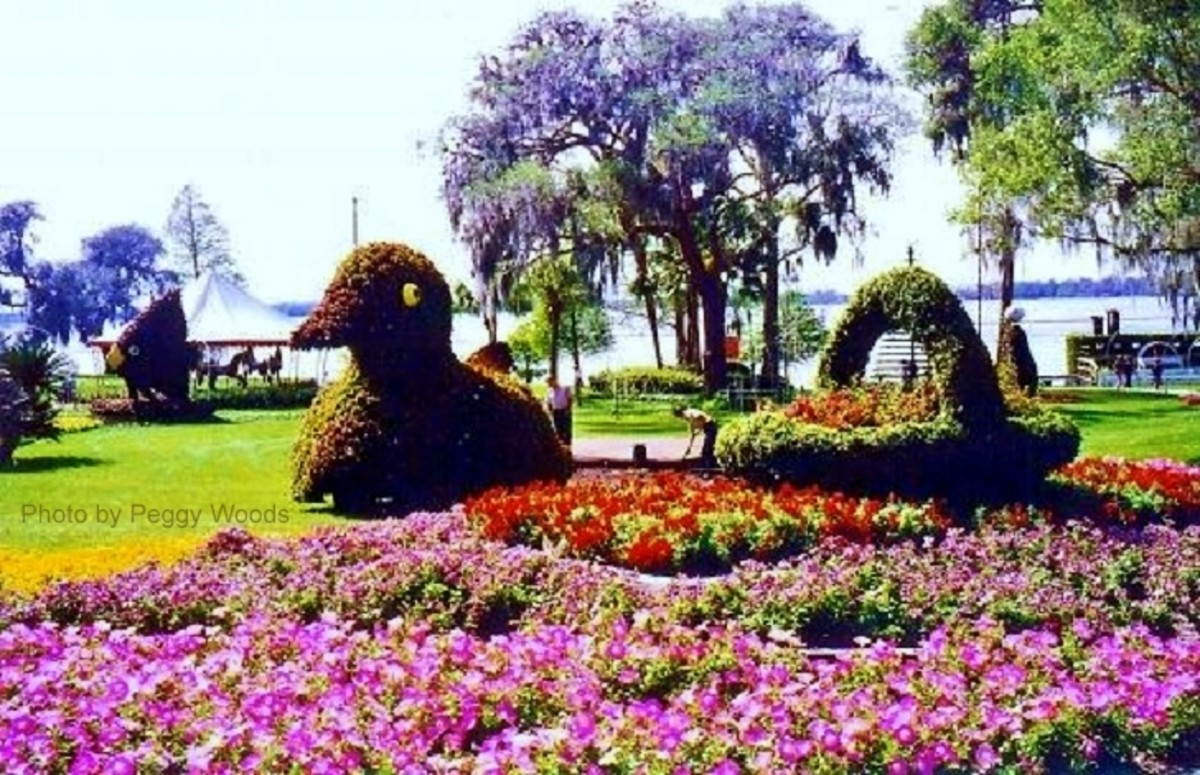 Bird and Basket Topiaries found at Cypress Gardens