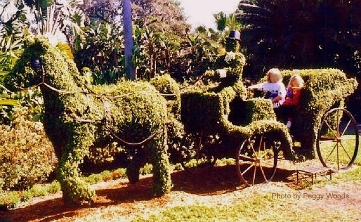Horse Drawn Carriage Topiary photographed at Cypress Gardens
