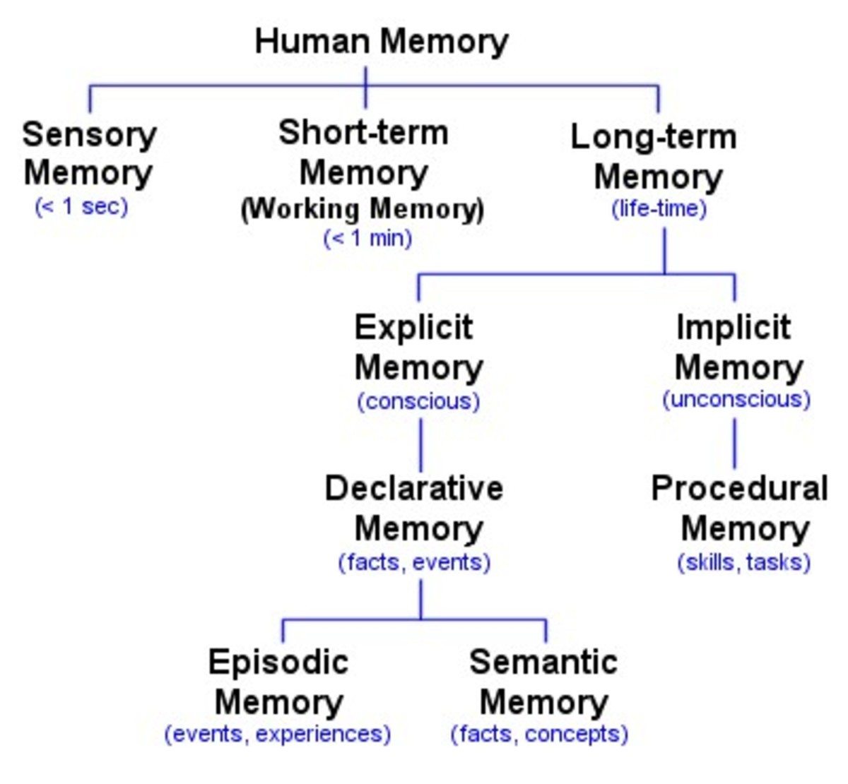 memory-and-brain-mechanisms