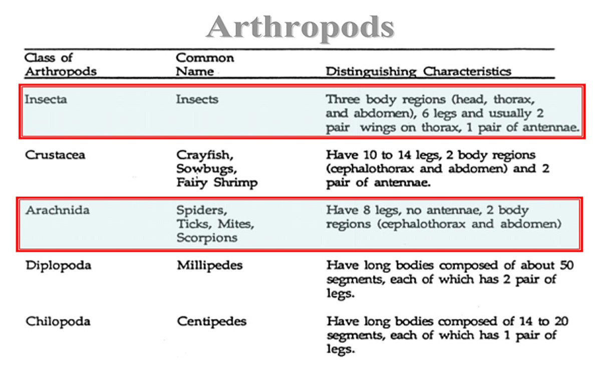 Phylum Arthropoda and the five diverse class